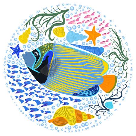 Emperor angelfish Pomacanthus imperator on white, sea animal wildlife character. Nature underwater, marine wild ocean zoo fish. Vettoriali