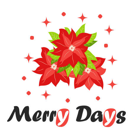 Bouquet of traditional Christmas poinsettia flower with green leaves and red petals. Cute winter poster, christmas card, banner, sticker