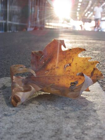 A close up view of a fallen dry leaf on a train platform Banco de Imagens