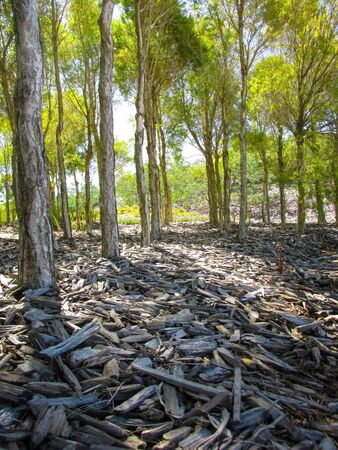 Ground view of wood chips. They are pieces of wood formed by cutting pieces of wood. They may be used for biomass solid fuel or to produce wood pulp 写真素材