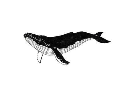 deviant: Whale illustration