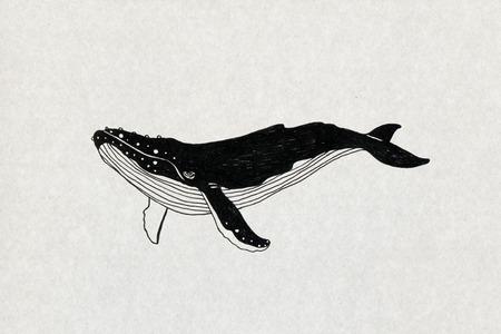 クジラのイラスト 写真素材