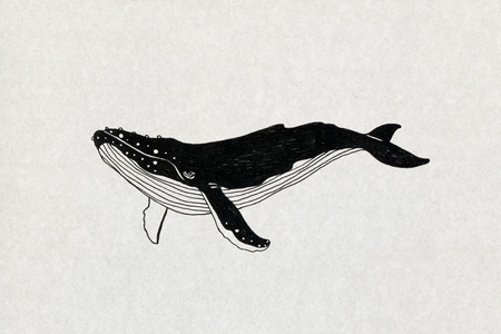 고래 그림 스톡 콘텐츠