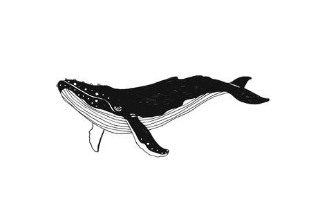 Hand drawn illustration whale. Black contour art-work isolated on white background. Vector nautical drawing
