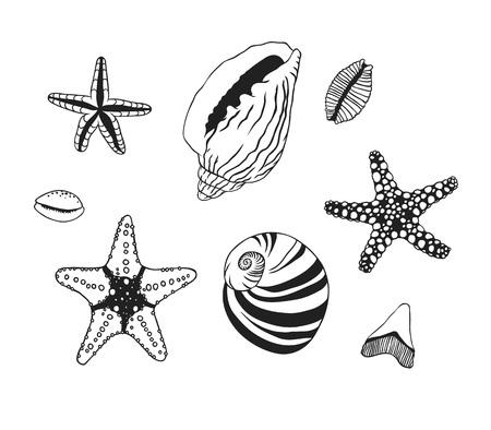 Black contour nautical illustration. Black Ink art work. Hand Drawn boho illustration. Vector set of sea trophy. Ink drawing Ilustração