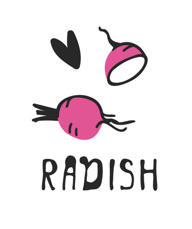 Hand drawn set of vegetable and text. Vector artistic drawing radish
