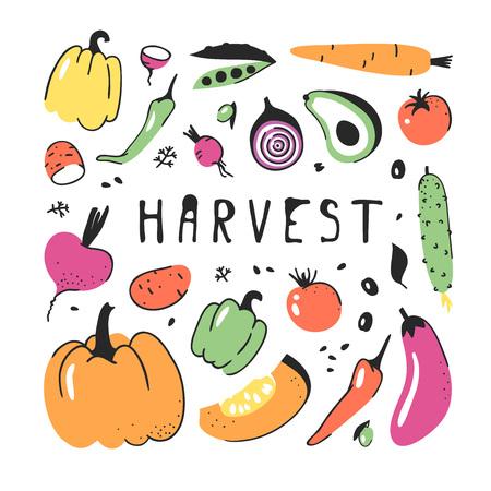 Hand drawn set of vegetable. Vector artistic drawing food. Summer illustration Illustration