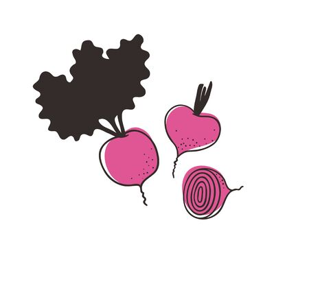 Doodle beet. Hand drawn stylish fruit and vegetable. Vector artistic drawing fresh organic food. Summer illustration vegan ingrediens for smoothies