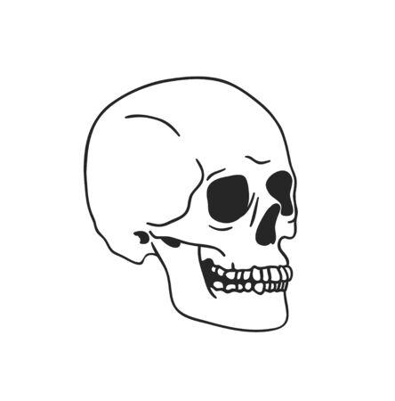 Hand drawn illustration skull.Vector art drawing Stock fotó - 147796670