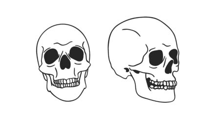 Hand drawn illustration skull.Vector art drawing Stock fotó - 147796667