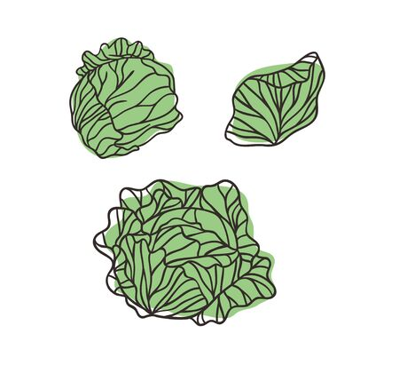 Doodle white cabbage. Hand drawn stylish fruit and vegetable. Vector artistic drawing fresh organic food. Summer illustration vegan ingrediens for smoothies Stock fotó - 147796755