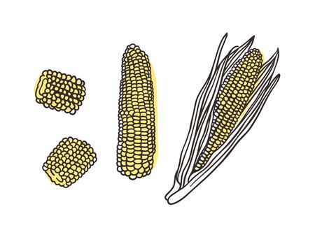 Doodle corn. Hand drawn stylish fruit and vegetable. Vector artistic drawing fresh organic food. Summer illustration vegan ingrediens for smoothies Stock fotó - 147796760
