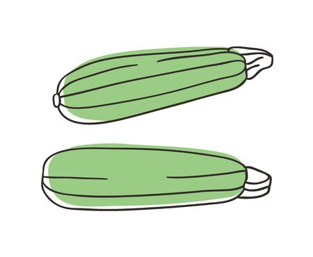 Doodle squash. Hand drawn stylish fruit and vegetable. Vector artistic drawing fresh organic food. Summer illustration vegan ingrediens for smoothies Stock fotó - 147731371