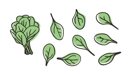 Doodle spinach. Hand drawn stylish fruit and vegetable. Vector artistic drawing fresh organic food. Summer illustration vegan ingrediens for smoothies  イラスト・ベクター素材