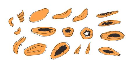 Doodle Tropical papaya. Hand drawn stylish fruit and vegetable. Vector artistic drawing fresh organic food. Summer illustration vegan ingrediens for smoothies