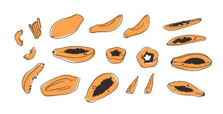 Doodle Tropical papaya. Hand drawn stylish fruit and vegetable. Vector artistic drawing fresh organic food. Summer illustration vegan ingrediens for smoothies Stock fotó - 148164305