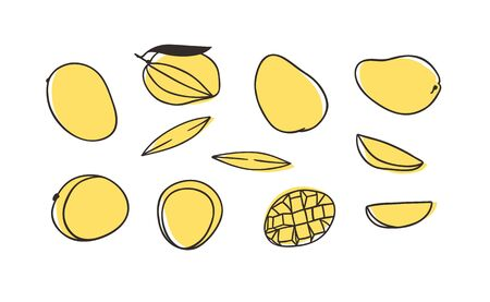 Doodle Tropical Mango . Hand drawn stylish fruit and vegetable. Vector artistic drawing fresh organic food. Summer illustration vegan ingrediens for smoothies 向量圖像