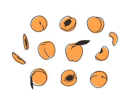 Doodle peach. Hand drawn stylish fruit and vegetable. Vector artistic drawing fresh organic food. Summer illustration vegan ingrediens for smoothies Stock fotó - 148508755