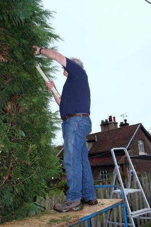 boom kappen: boom snijden 1