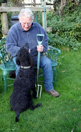 wagging: A Standard Poodle with her master