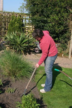 hoeing: Woman hoeing the garden Stock Photo
