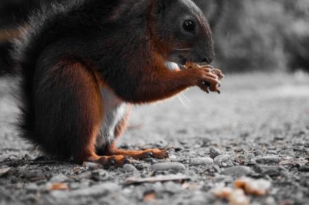 Wiewiórka jedzenie orzechów