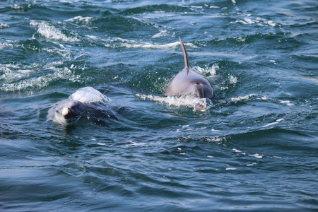 watch groups: A group of dolphins in the sea