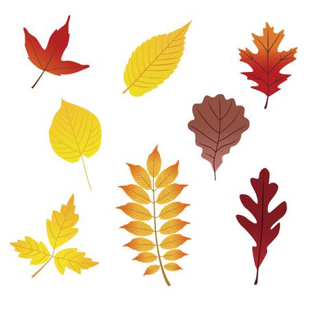 様々 な美しい赤と黄色落ち葉  イラスト・ベクター素材
