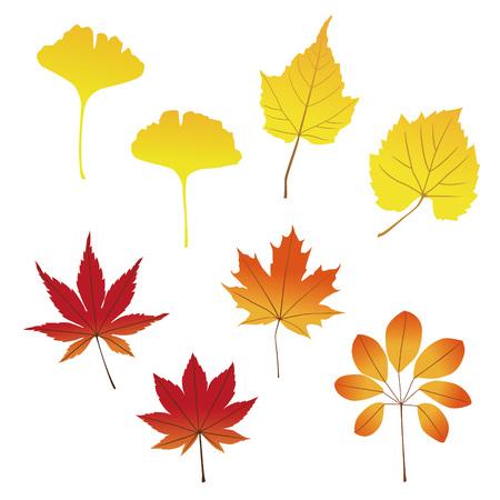 다양한 빨간색 아름다운 노란색 떨어지는 나뭇잎