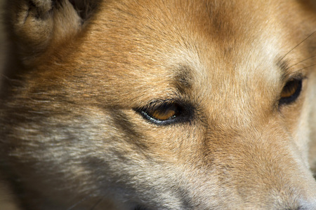 A close up photo of dog's face