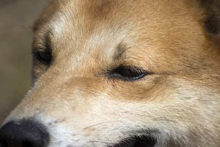 face close up: A close up photo of dogs face