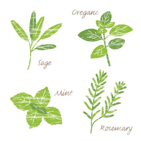 rosemary: Various herbs illustration, sage, oregano, mint, rosemary