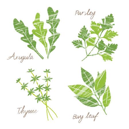 Illustration of various herbs, arugula, parsley, thyme, bay leaf