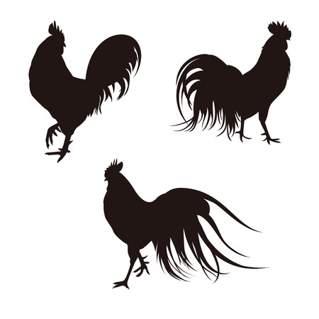 animal cock: Realistic three different roosters black silhouette illustration