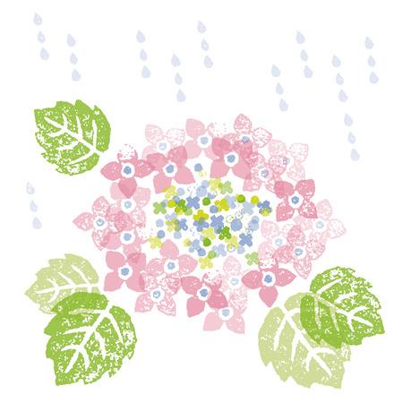 the rainy season: A Pink hydrangea in a rainy season