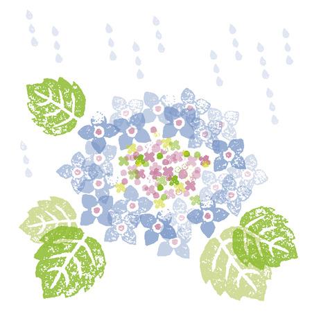 一个蓝色的绣球花在一个雨季