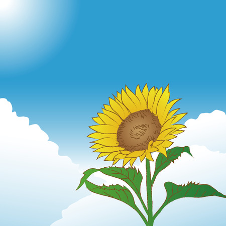 Blue sky and hand drawn sketch sunflower, image of summer