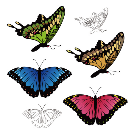 Realistic Colorful Swallowtail and Morpho butterfly illustration