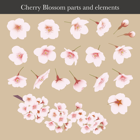 Cherry blossom, Cherry flower, parts and graphic elements, illustration