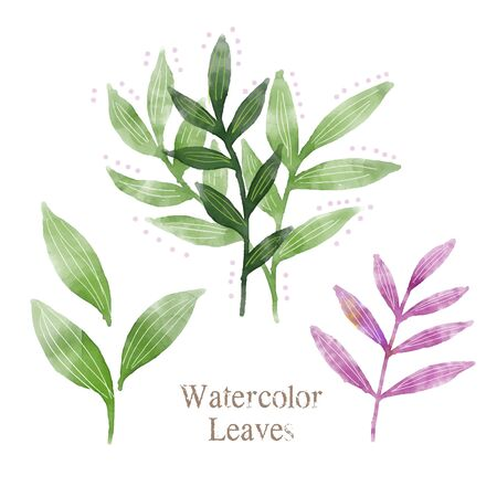 Watercolor leaves illustration, nature image