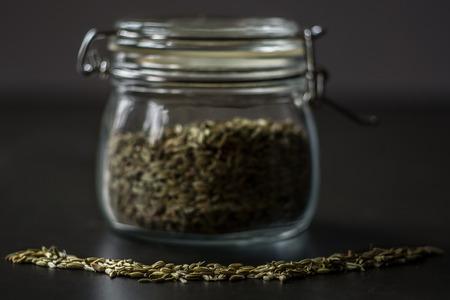 finocchio: Semi di finocchio in un vaso