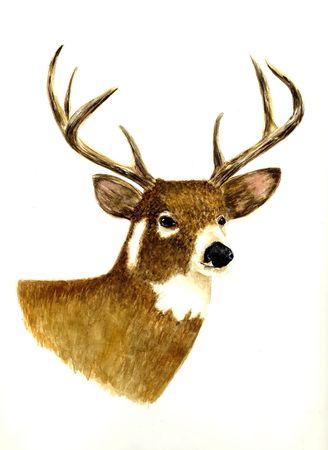 realism: Deer (Male)