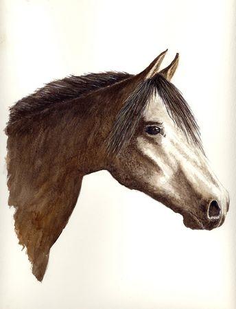 Arabian Horse Фото со стока