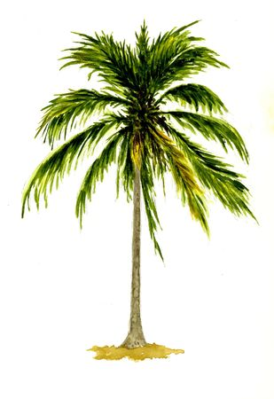 watercolour: Palm Tree