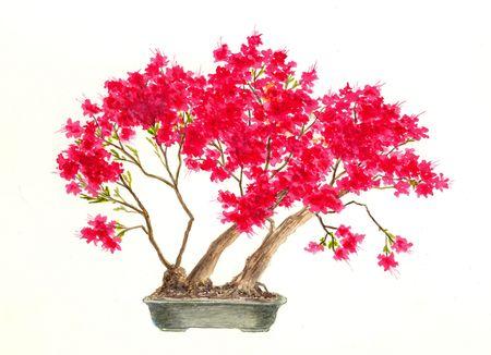 Bonsai Tree (Kurume Azalea) Фото со стока