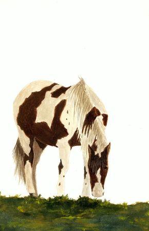 Horse Grazing Фото со стока