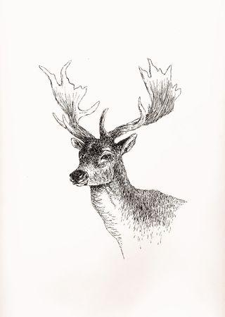 Deer Portrait Фото со стока