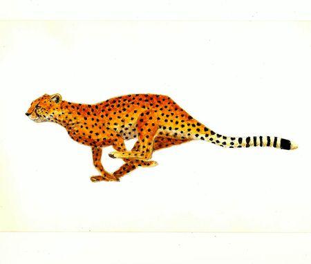 realism: Cheetah Stock Photo
