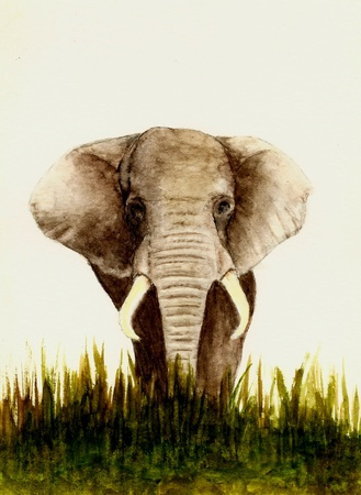 realism: Elephant (Front View) Stock Photo
