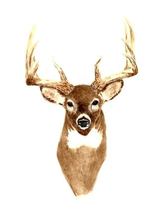 watercolour: Deer (Front View)